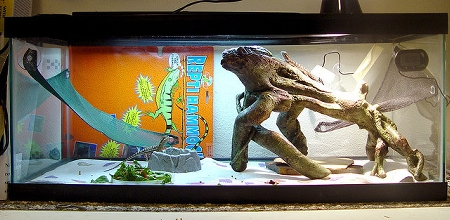 Great Example of Bearded Dragon Housing